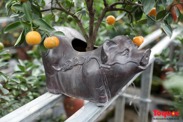 Độc đáo với quất bonsai trồng trên lưng heo đất phục vụ Xuân Kỷ Hợi 2019 - Ảnh 6.