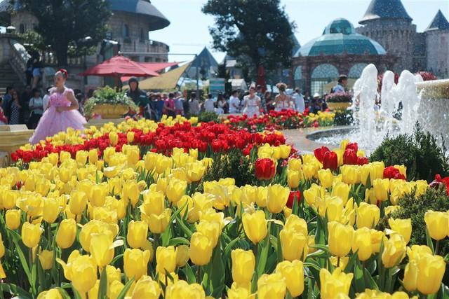 Lễ hội hoa tulip lớn nhất Việt Nam tại Sun World Ba Na Hills - Ảnh 3.