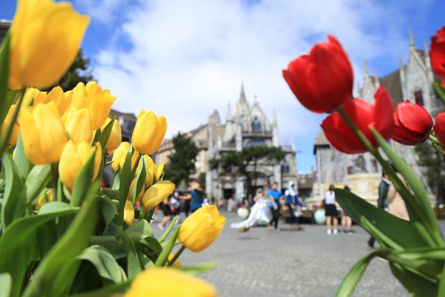 Lễ hội hoa tulip lớn nhất Việt Nam tại Sun World Ba Na Hills - Ảnh 4.