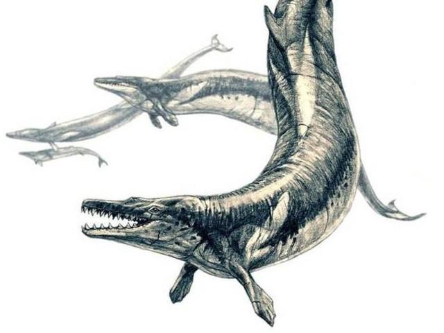 Tìm thấy hóa thạch cá voi khổng lồ thời cổ đại - Ảnh 1.