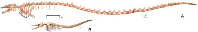 Tìm thấy hóa thạch cá voi khổng lồ thời cổ đại - Ảnh 3.