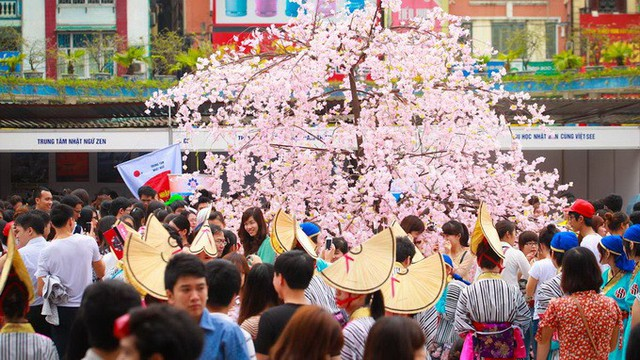 Lễ hội hoa anh đào 2019 sẽ tuyển chọn Đại sứ thiện chí hoa anh đào Việt Nam  - Ảnh 1.
