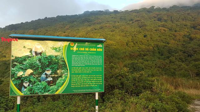 Du khách không nên cho khỉ và các loài động vật hoang dã ăn thức ăn khi tham quan bán đảo Sơn Trà  - Ảnh 1.
