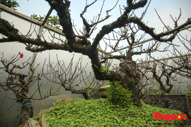 Vua đào Nhật Tân xây nhà lắp điều hòa cho thất thốn tiến vua - Ảnh 8.