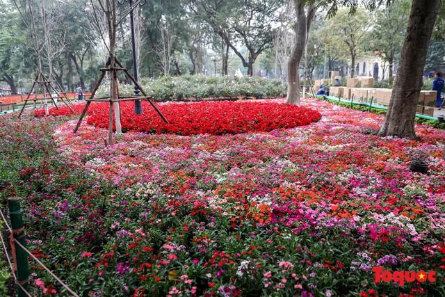 Hà Nội làm heo khổng lồ bằng cây xanh đón Tết Kỷ Hợi 2019 - Ảnh 6.