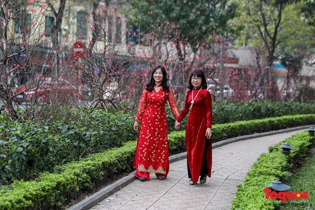 Hà Nội làm heo khổng lồ bằng cây xanh đón Tết Kỷ Hợi 2019 - Ảnh 13.