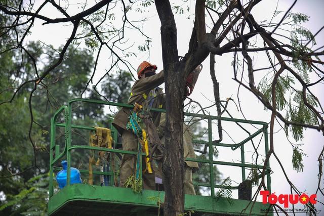 Chặt bỏ cây xanh dọc sông Tô Lịch, mở rộng mặt đường tuyến vành đai 2 - Ảnh 4.
