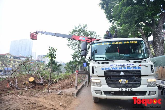 Chặt bỏ cây xanh dọc sông Tô Lịch, mở rộng mặt đường tuyến vành đai 2 - Ảnh 6.