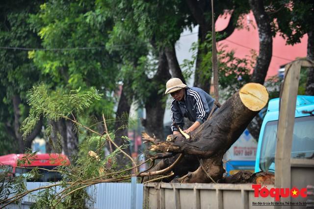 Chặt bỏ cây xanh dọc sông Tô Lịch, mở rộng mặt đường tuyến vành đai 2 - Ảnh 7.