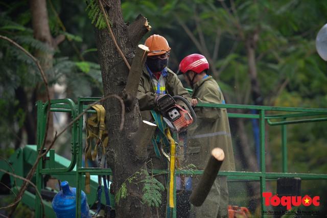 Chặt bỏ cây xanh dọc sông Tô Lịch, mở rộng mặt đường tuyến vành đai 2 - Ảnh 11.