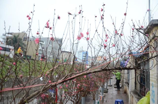 Bất chấp mưa lạnh, người Hà Nội vẫn tìm về chợ hoa Quảng Bá để chơi đào sớm - Ảnh 6.