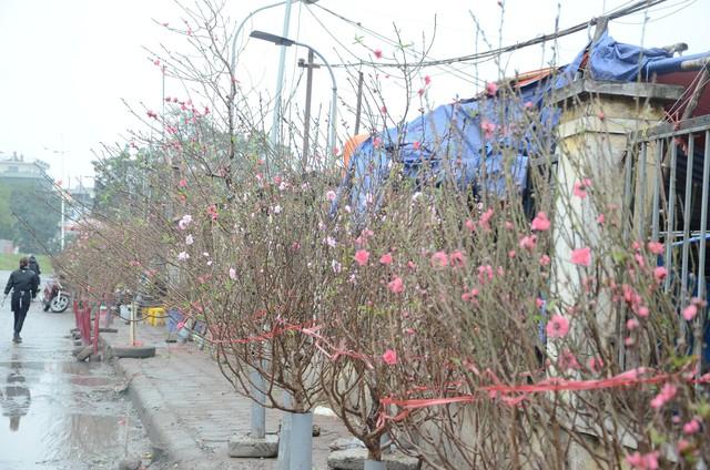 Bất chấp mưa lạnh, người Hà Nội vẫn tìm về chợ hoa Quảng Bá để chơi đào sớm - Ảnh 8.