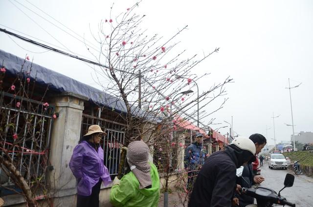 Bất chấp mưa lạnh, người Hà Nội vẫn tìm về chợ hoa Quảng Bá để chơi đào sớm - Ảnh 12.