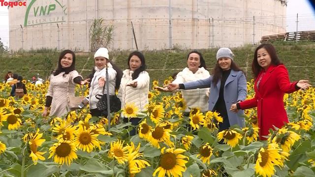 Hàng ngàn lượt khách check-in cánh đồng hoa hướng dương rực rỡ ở Quảng Bình  - Ảnh 2.