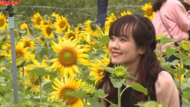 Hàng ngàn lượt khách check-in cánh đồng hoa hướng dương rực rỡ ở Quảng Bình  - Ảnh 3.