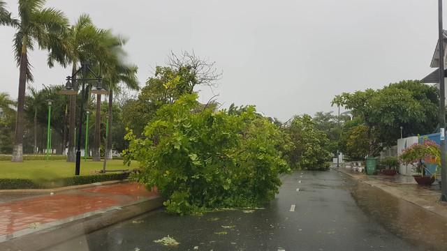 Mưa lớn, nhiều cây xanh ngã đổ ở Đà Nẵng  - Ảnh 9.