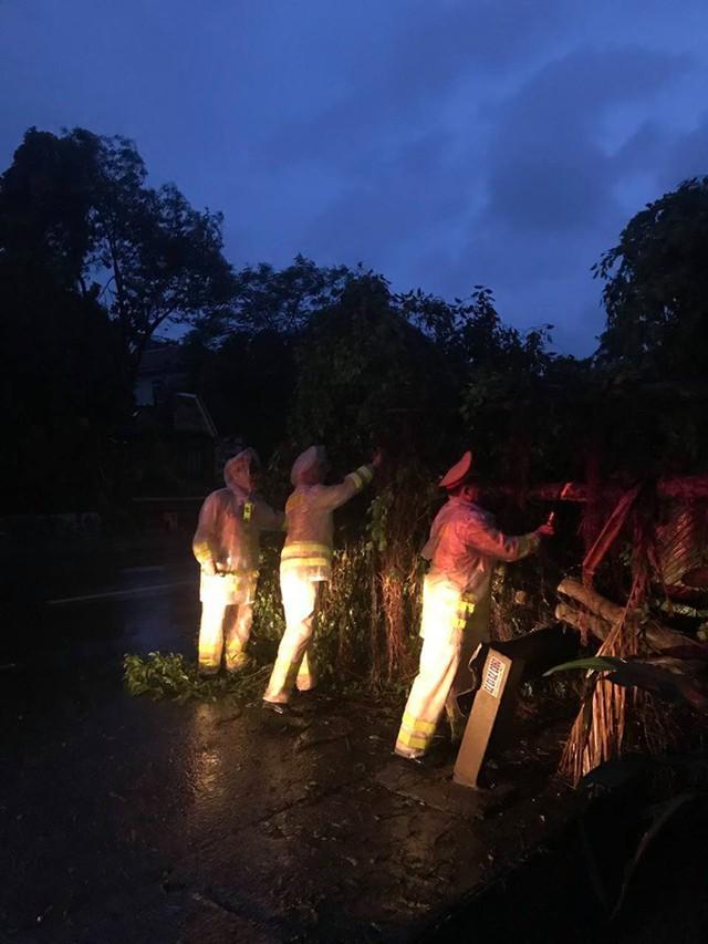 Mưa lớn, nhiều cây xanh ngã đổ ở Đà Nẵng  - Ảnh 5.