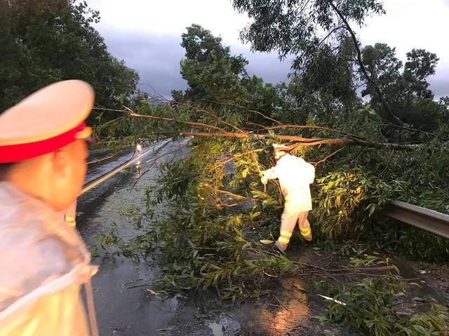 Mưa lớn, nhiều cây xanh ngã đổ ở Đà Nẵng  - Ảnh 3.