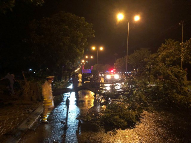 Mưa lớn, nhiều cây xanh ngã đổ ở Đà Nẵng  - Ảnh 4.