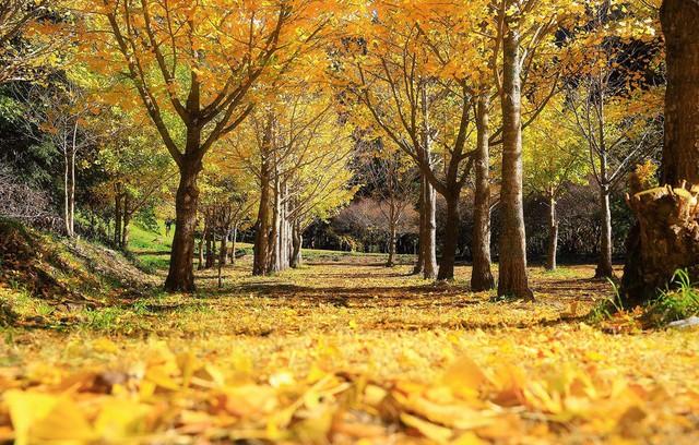 5 địa điểm với khung cảnh mùa thu không khác gì trong phim ở Đài Loan - Ảnh 4.