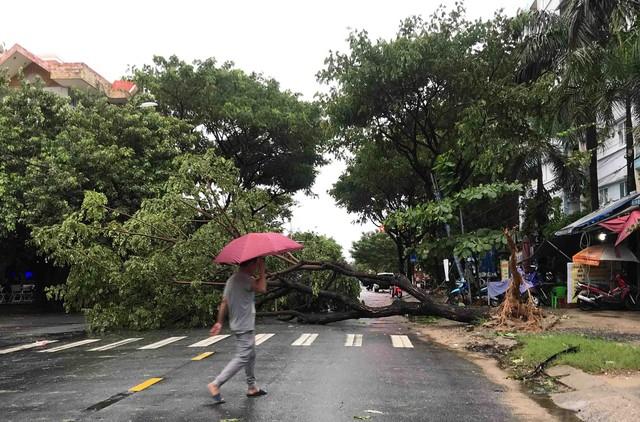 Mưa lớn, nhiều cây xanh ngã đổ ở Đà Nẵng  - Ảnh 8.