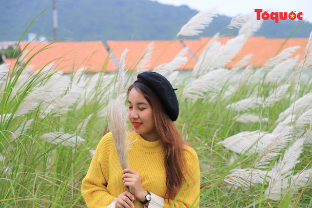 Mê mẩn mùa lau trắng ở Đà Nẵng  - Ảnh 4.