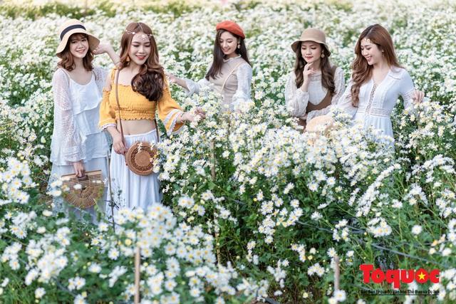 Giới trẻ mê mẩn 'check-in' bên vườn cúc họa mi lớn nhất Hà Nội - Ảnh 7.