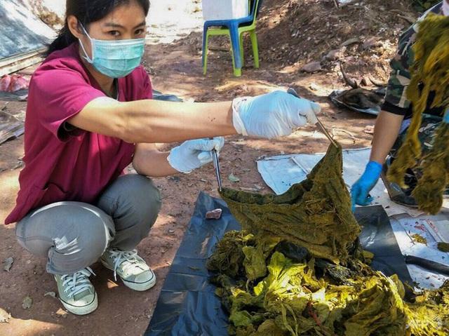 Thái Lan: Du khách đến các công viên quốc gia phải mang theo túi đựng rác - Ảnh 1.