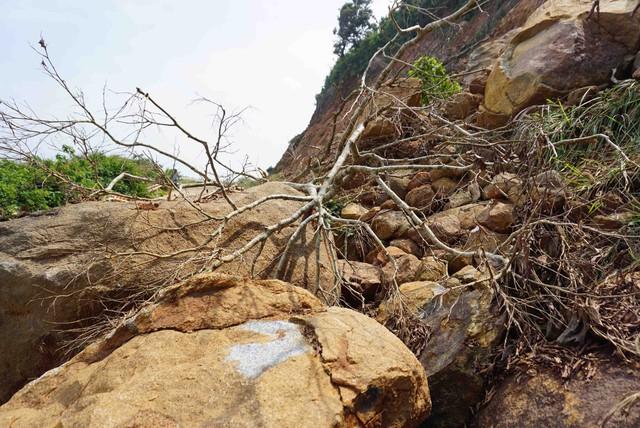 Đường lên bán đảo Sơn Trà xuất hiện nhiều điểm sạt lở  - Ảnh 5.