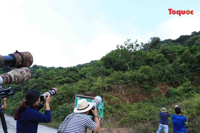 Nhiếp ảnh gia sẽ được cấp thẻ vàng khi lên bán đảo Sơn Trà.