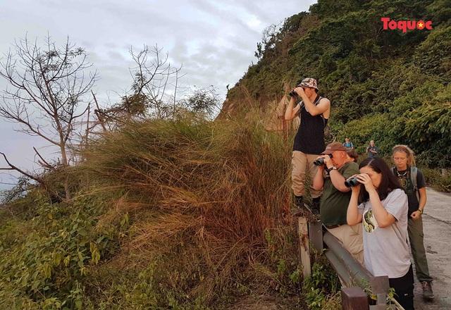 Khách du lịch quốc tế ngắm voọc chà vá chân nâu trên bán đảo Sơn Trà.