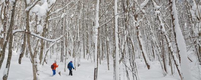 """Du lịch Nhật Bản mùa đông: đừng bỏ qua """"thiên đường"""" trượt tuyết Fukushima - Ảnh 1."""