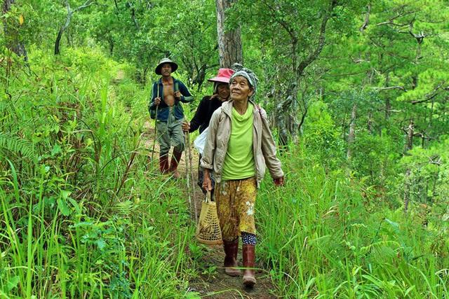 Vinh danh bốn Vườn Di sản ASEAN của Việt Nam - Ảnh 1.