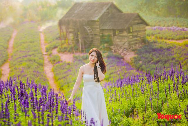 Vẻ đẹp ngỡ ngàng của cánh đồng hoa Nữ hoàng xanh như trời Âu giữa Hà Nội - Ảnh 8.