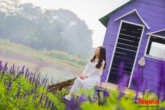 Vẻ đẹp ngỡ ngàng của cánh đồng hoa Nữ hoàng xanh như trời Âu giữa Hà Nội - Ảnh 6.