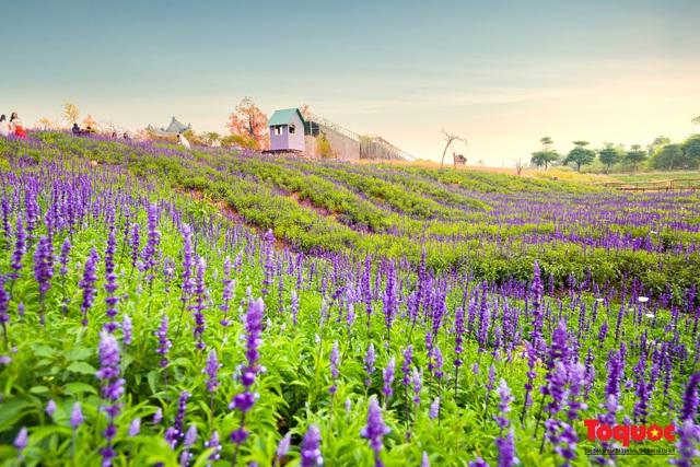 Vẻ đẹp ngỡ ngàng của cánh đồng hoa Nữ hoàng xanh như trời Âu giữa Hà Nội - Ảnh 13.