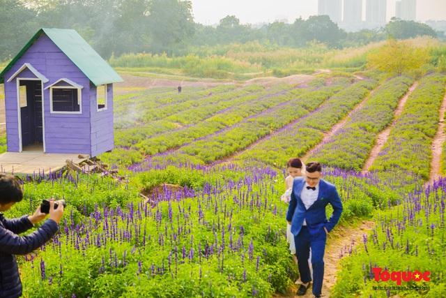Vẻ đẹp ngỡ ngàng của cánh đồng hoa Nữ hoàng xanh như trời Âu giữa Hà Nội - Ảnh 7.