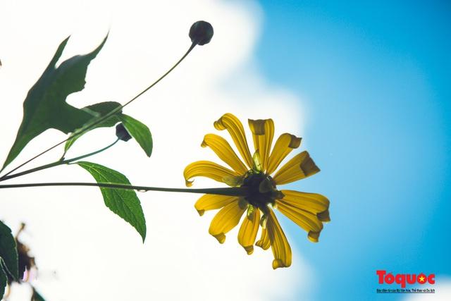 Ngập tràn sắc hoa Dã Quỳ trên cao nguyên mộng mơ - Ảnh 22.