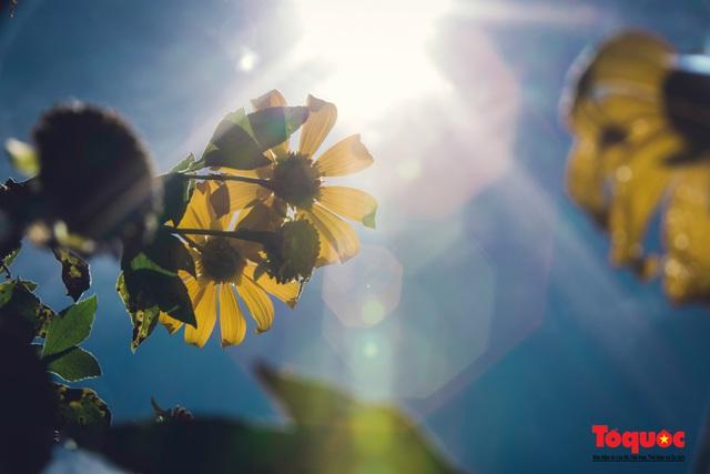 Ngập tràn sắc hoa Dã Quỳ trên cao nguyên mộng mơ - Ảnh 16.