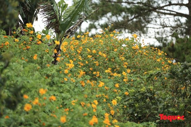 Ngập tràn sắc hoa Dã Quỳ trên cao nguyên mộng mơ - Ảnh 6.