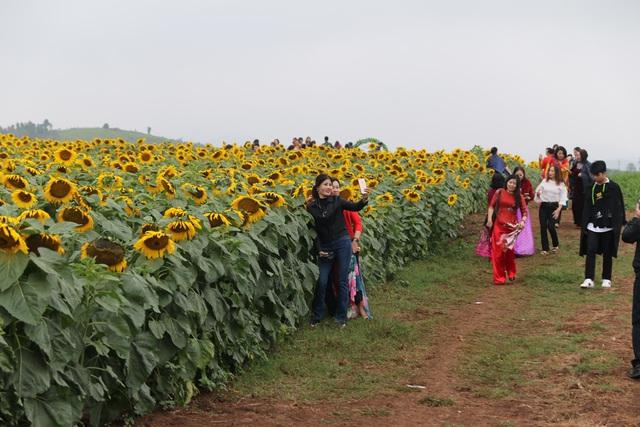 """Mãn nhãn với vẻ đẹp """"đượm vàng"""" của cánh đồng hoa hướng dương lớn nhất Việt Nam tại Nghệ An - Ảnh 4."""