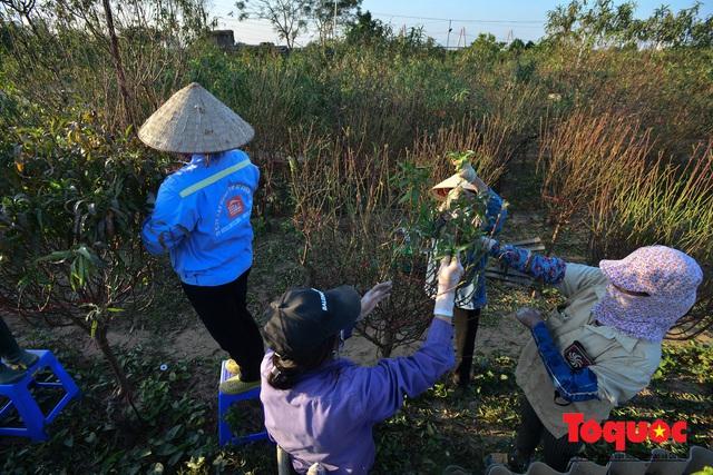 Người dân làng đào Nhật Tân tất bật tuốt lá, chuẩn bị cho Tết Nguyên đán - Ảnh 2.