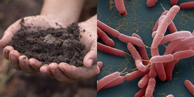 Vụ 2 anh ruột trong một gia đình tử vong: Phát hiện mẫu đất có chứa vi khuẩn Whitmore - Ảnh 1.