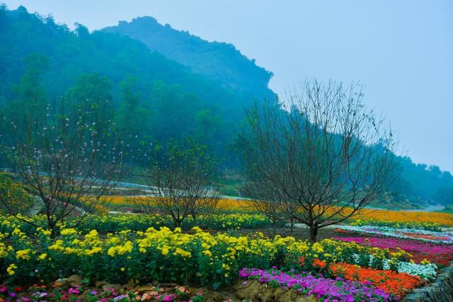 Ngắm thung lũng hoa tuyệt đẹp chuẩn bị chào đón du khách đến Lễ hội hoa Xuân Bái Đính 2019 - Ảnh 2.