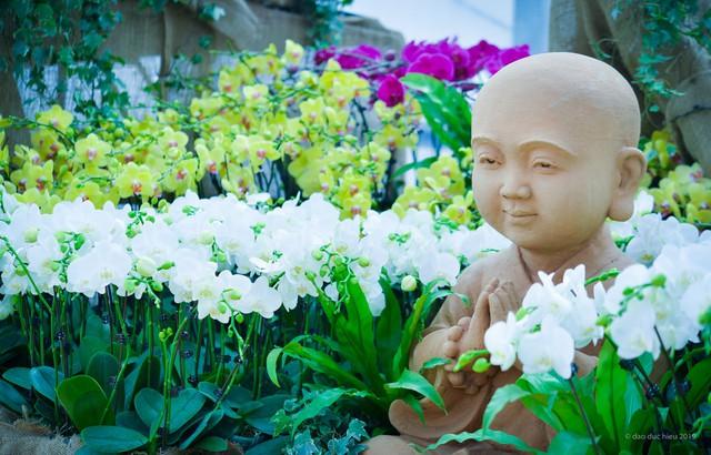 Ngắm thung lũng hoa tuyệt đẹp chuẩn bị chào đón du khách đến Lễ hội hoa Xuân Bái Đính 2019 - Ảnh 1.