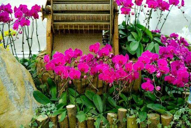Ngắm thung lũng hoa tuyệt đẹp chuẩn bị chào đón du khách đến Lễ hội hoa Xuân Bái Đính 2019 - Ảnh 6.
