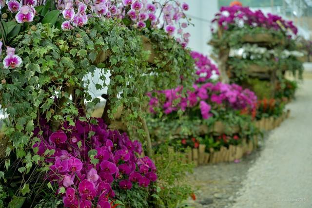 Ngắm thung lũng hoa tuyệt đẹp chuẩn bị chào đón du khách đến Lễ hội hoa Xuân Bái Đính 2019 - Ảnh 4.