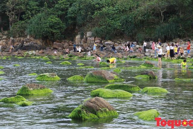 Đẹp ngỡ ngàng mùa rêu xanh tại rạn Nam Ô - Ảnh 13.