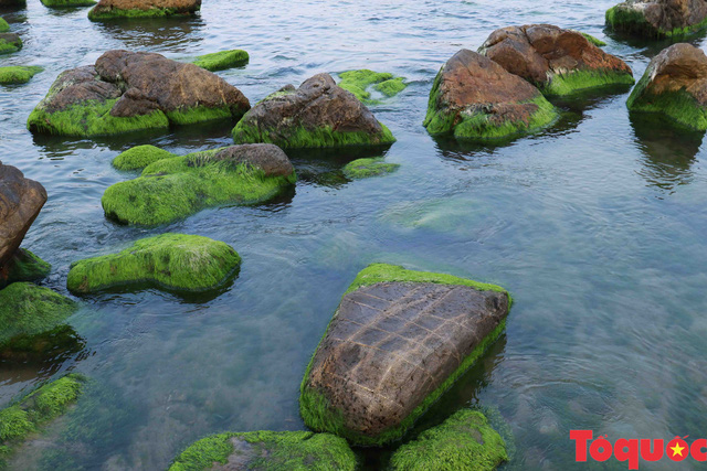 Đẹp ngỡ ngàng mùa rêu xanh tại rạn Nam Ô - Ảnh 5.
