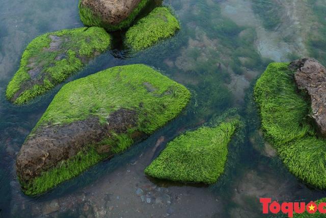 Đẹp ngỡ ngàng mùa rêu xanh tại rạn Nam Ô - Ảnh 11.